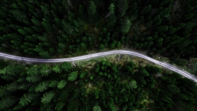 flying over the forest - andare giù video stock e b–roll