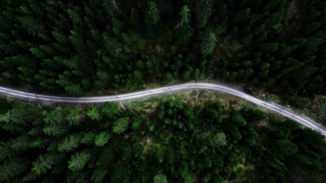 vídeos de stock, filmes e b-roll de voando sobre a floresta - mover para baixo