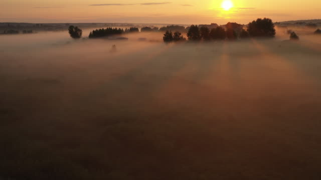 4K Flying over the morning summer meadow in the fog, beautiful summer landscape, high quality