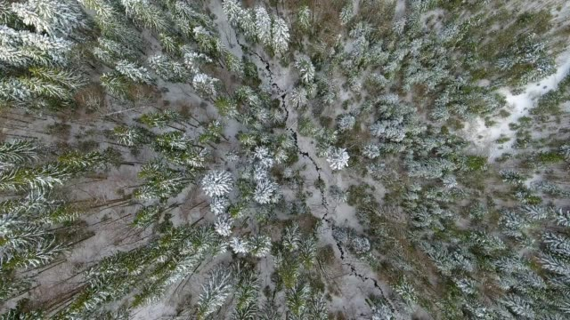 AERIAL: Flying over the snowy forest. Ukraine video