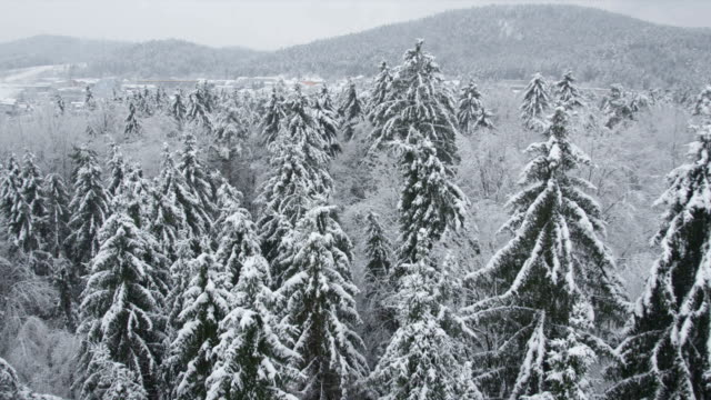 AERIAL: Flying over the snowy forest video