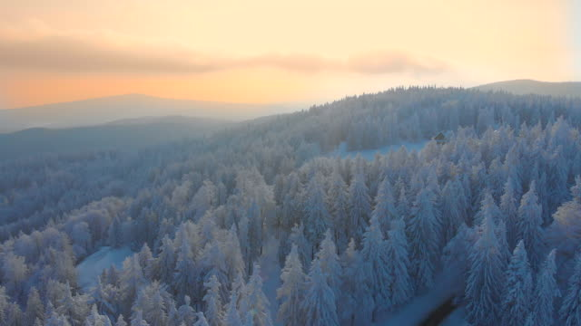aerial: flying over the snowy spruce forest and toward the lonely wooden cabin. - purezza video stock e b–roll