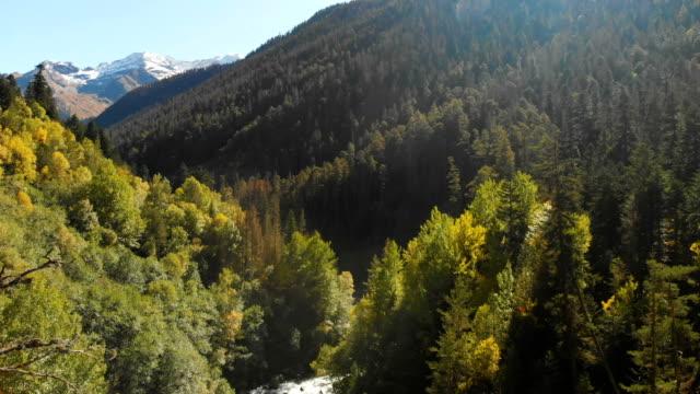fliegen über die gipfel und zwischen den bäumen des nadelwaldes in der herbst-sommer-periode. luftaufnahme schöne bergschlucht mit wildem waldfluss an einem sonnigen tag - kieferngewächse stock-videos und b-roll-filmmaterial