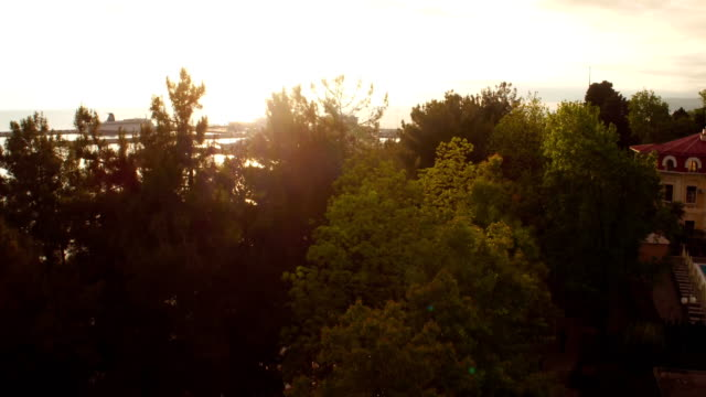 Flying over the tops of trees, the promenade, the Park and the sea aerial shot sea port in Sochi Russia at sunset in the sun. Camera flies over the trees and on the horizon the sea with sunset reflection international match stock videos & royalty-free footage