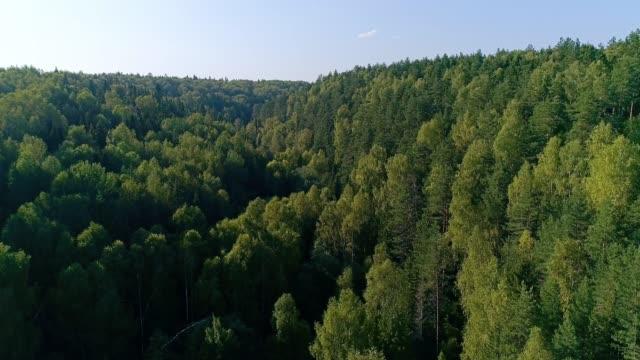 나무 꼭대기를 비행. 드론 영상 - mountain top 스톡 비디오 및 b-롤 화면