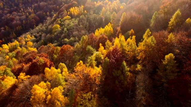 Flying over woodlands in autumn
