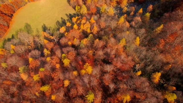Latające nad woodlands jesienią – film