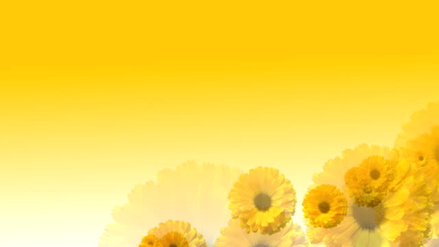 Flying over Yellow Flowers Fly over flowers. floral pattern stock videos & royalty-free footage