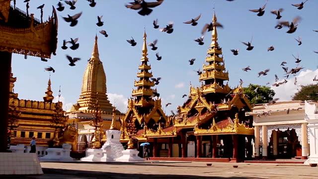 uçan güvercinler pagodadan üzerinde. - kamboçya stok videoları ve detay görüntü çekimi