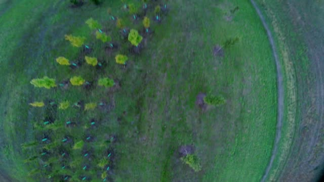 flying racing drone quadcopter over green field at sunset, aerial footage - quadcopter filmów i materiałów b-roll