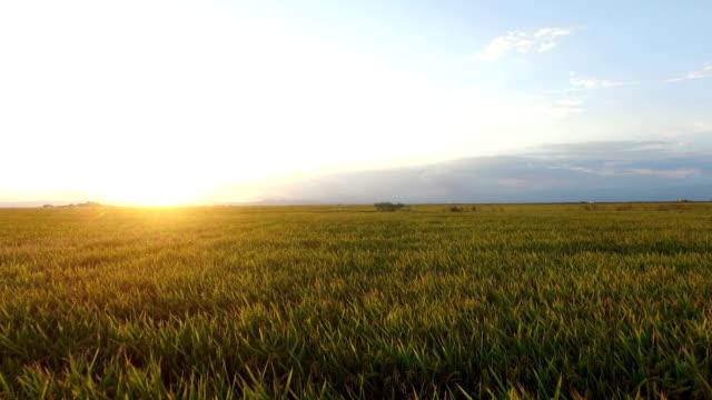 Flying rice field video