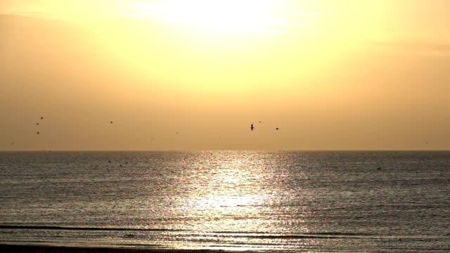 vídeos de stock e filmes b-roll de flying sea gulls - linha do horizonte sobre água