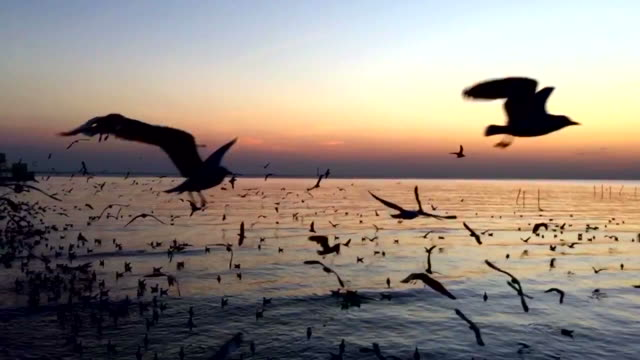Flying seagulls video