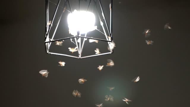vídeos y material grabado en eventos de stock de flying termite amor bombilla de luz en la noche - insecto