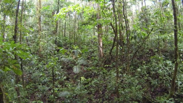 Flying through Amazonian rainforest in Ecuador. video