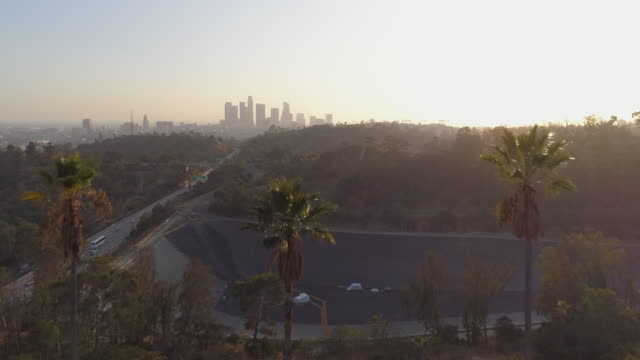 Flying through palm trees over a Los Angeles park video