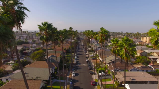 Flying Through Palm Trees Over a Los Angeles Street