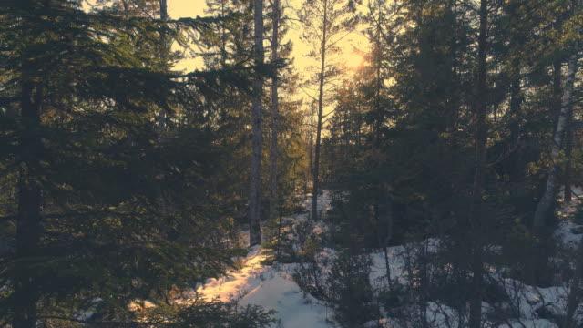 flygande genom vintern skog vid solnedgången. antenn drönare sköt rör sig mellan granar. vacker natur bakgrund i 4k - pine forest sweden bildbanksvideor och videomaterial från bakom kulisserna