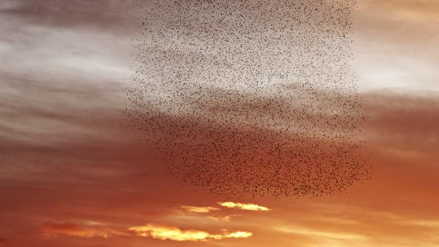 Flying together at sunset
