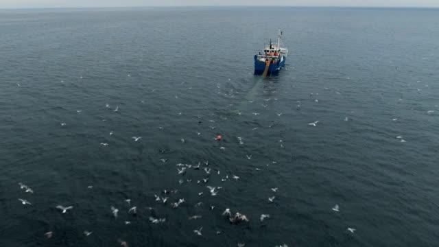 ein handelsschiff angeln zufliegen, zieht schleppnetz - fang stock-videos und b-roll-filmmaterial