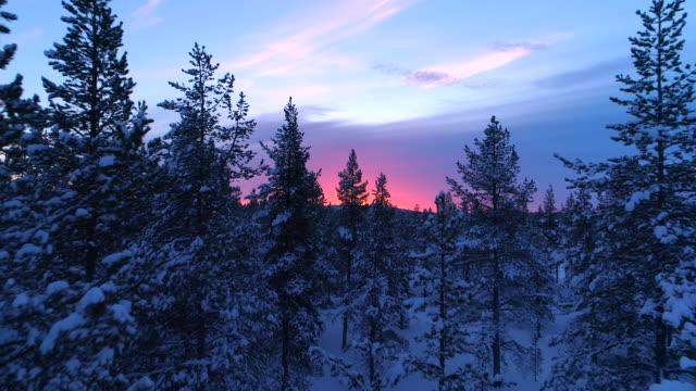 antenn: flying tråg snöiga granskog trädtopparna på vackra vinter sunset - pink sunrise bildbanksvideor och videomaterial från bakom kulisserna