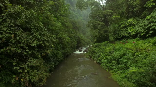 Flying up a river in tropical jungle video