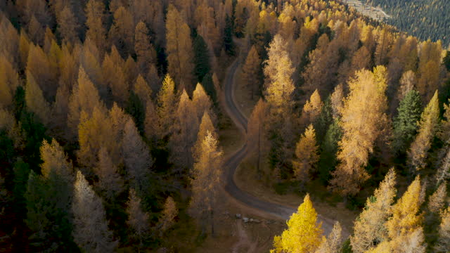 flying up from small road on a larch tree forest to the beauty of the Dolomites video