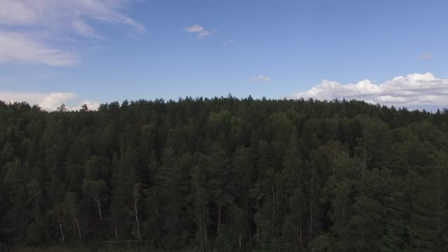 flyger upp över fir skog landskap i sverige. flygfoto - pine forest sweden bildbanksvideor och videomaterial från bakom kulisserna
