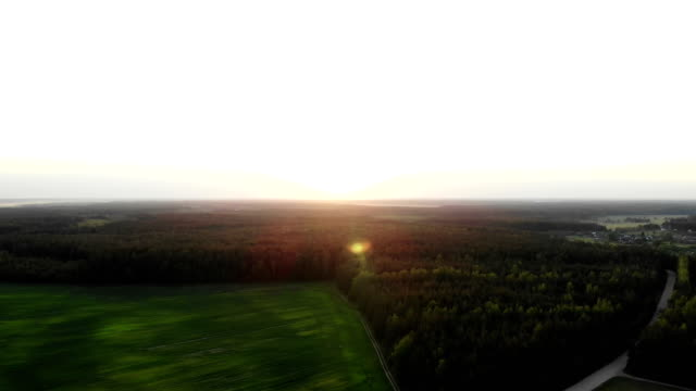 flying up through aok tree leaves and sun beams over beautiful country side landscape with field and trees, on sunset, aerial shot, drone, view from above - дубовый лес стоковые видео и кадры b-roll