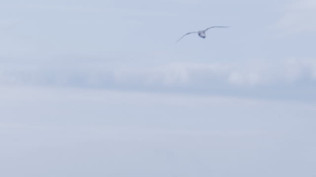 Flying gull flying seagull stock videos & royalty-free footage