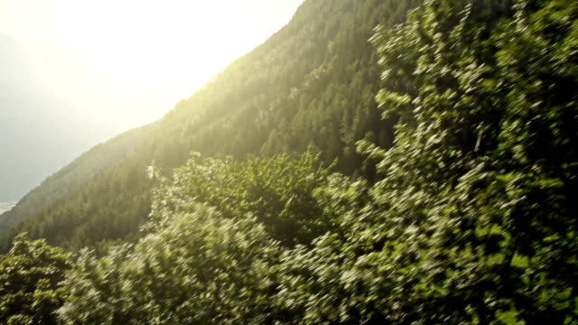 Flying view inside the forest video