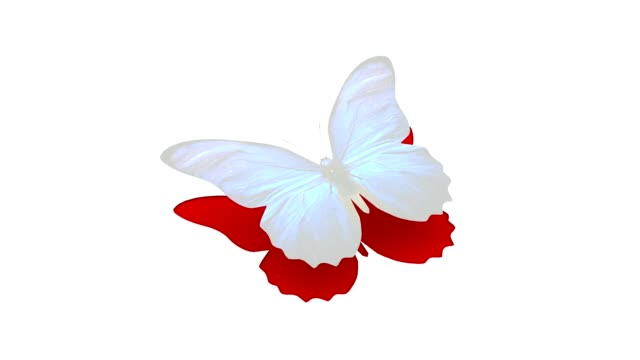 Flying white paper butterfly video