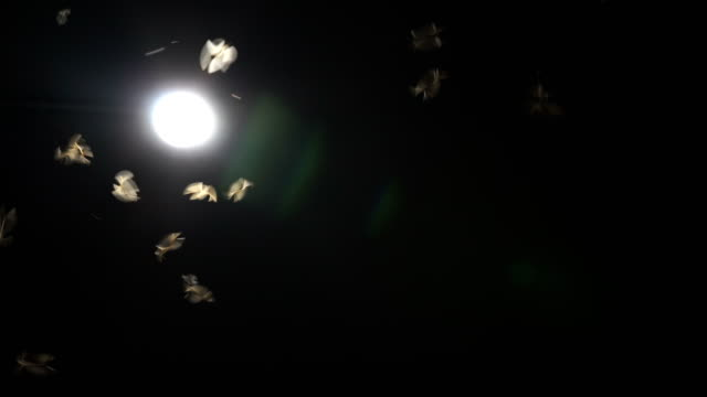 Flying Winged Termites flying into the light video