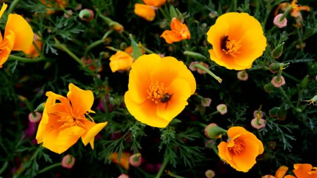 flying worker bee in der flower garden - fruchtwasserbeutel oder dottersack stock-videos und b-roll-filmmaterial
