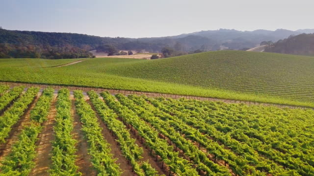 flyover of huge northern california vineyard - azienda vinivola video stock e b–roll