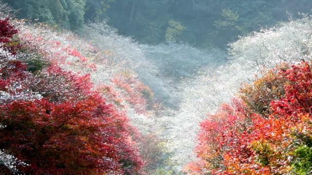 秋赤まま小原トヨタ名古屋にフォーカス - トヨタ点の映像素材/bロール