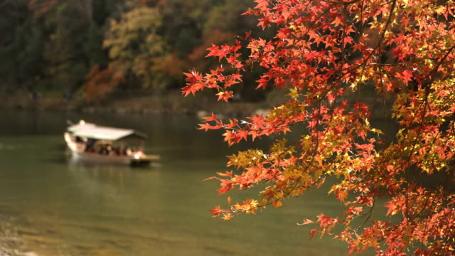 vídeos de stock e filmes b-roll de focus on autumn leaf forest at arashiyama and boat in katsura river - cidade de quioto