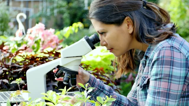 focused female botanist examines a plant sample in a nursery - orticoltura video stock e b–roll