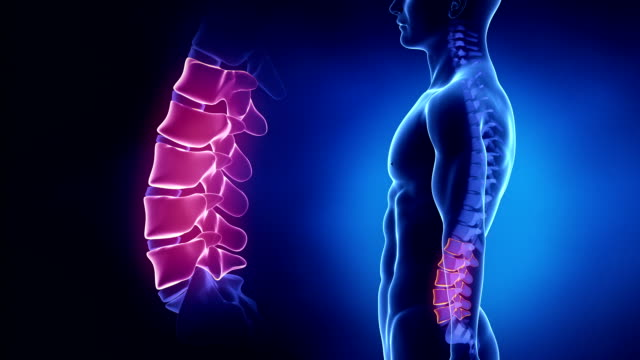 Concentré sur colonne vertébrale région lombaire à boucle - Vidéo