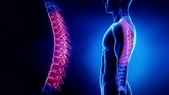 Focused on spine THORACIC region in loop video