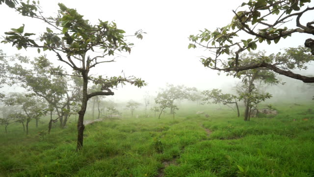 fog and forest video