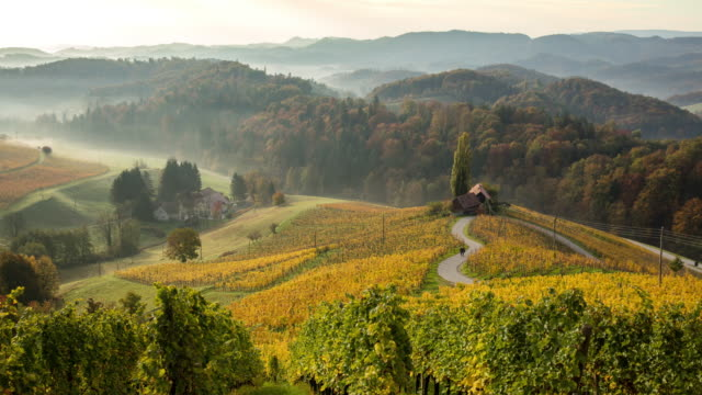T/L Fog and mist covering autumn vineyards and heart shaped road