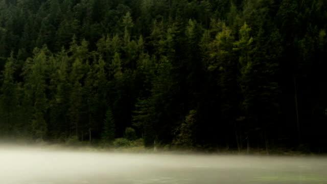 dimma flytande över gruenersee green lake i tragoss, steiermark alperna med berg skog bakgrund - steiermark bildbanksvideor och videomaterial från bakom kulisserna