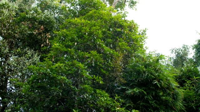 stockvideo's en b-roll-footage met mist stroomt op tropische bomen bij koude temperatuur op de top van bergen - duurzaam toerisme
