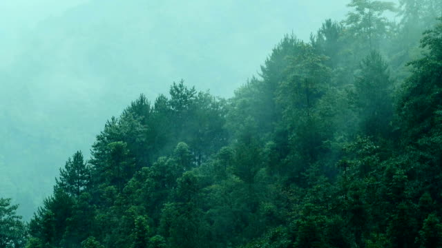 Fog flowing over Mountains Fog flowing over Mountains pine tree stock videos & royalty-free footage