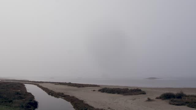 nebbia nelle paludi e nella fauna auctoctone - merlo acquaiolo video stock e b–roll