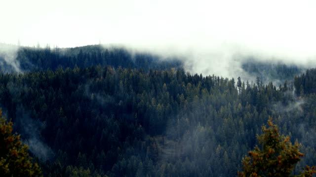 vídeos de stock, filmes e b-roll de levantamento da floresta de neblina - região thompson okanagan colúmbia britânica