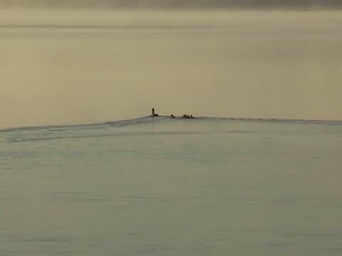 stockvideo's en b-roll-footage met fog on lake in kareliya - natuurgrond