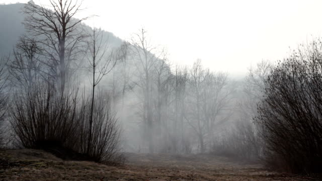 HD: Fog Over Glade video