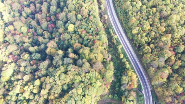 Fog over the mountains, early morning, flight over the forest with a road